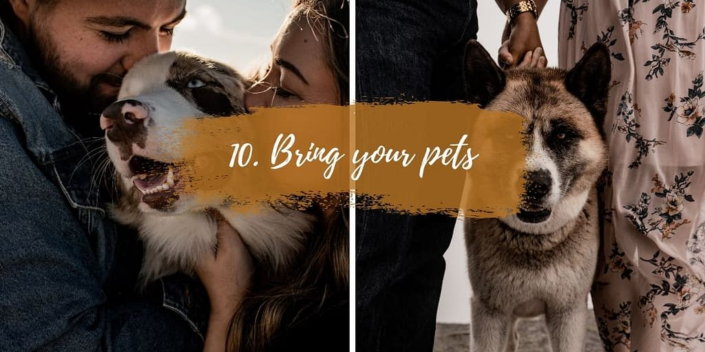 Bring your pets to your elopement